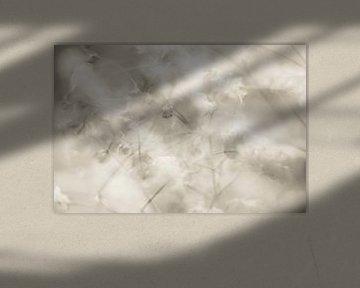 Impressionen von Gypsophila von Cathy Roels