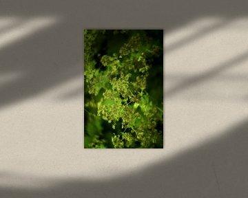 Sommerblumen in Grüntönen von Marianna Pobedimova