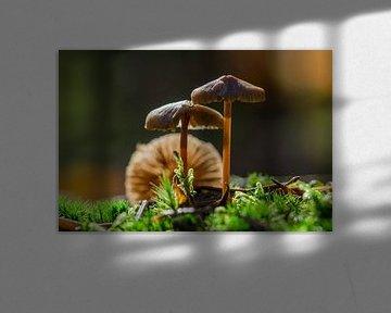 Paddenstoelen op het mos