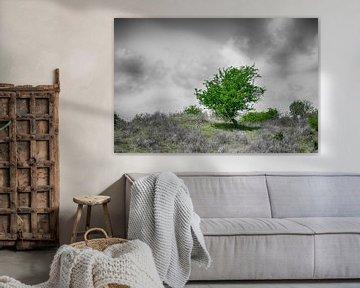 Eenzame boom van Mark Bolijn