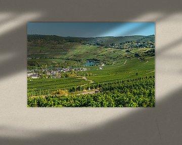 Vignes de Leiwen Moselle