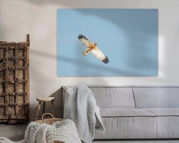 Vliegende bruine kiekendief. van Erik de Rijk