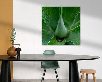 Im Herzen der Blume von Ineke Huizing