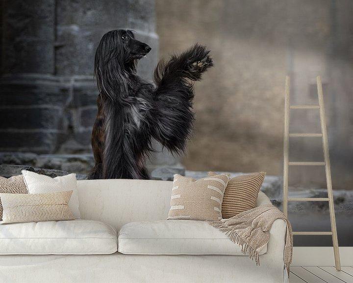 Beispiel fototapete: Afghanischer Hund High Five von Nuelle Flipse