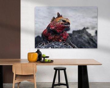 Galapagos Dragon von Ma.Rota