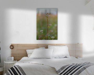 Wildblumen von Ans Bastiaanssen