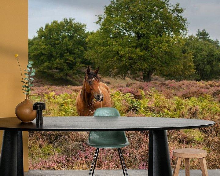 Beispiel fototapete: Wildpferd auf dem Veluwezoom von Compuinfoto .