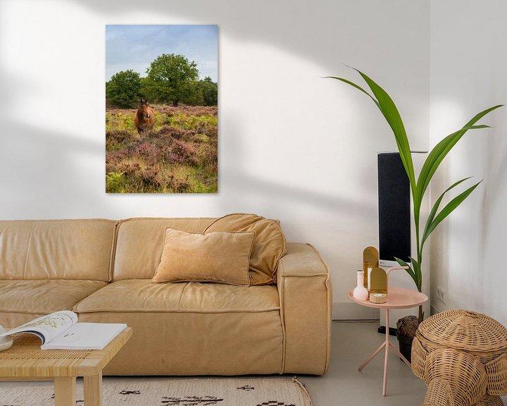 Beispiel: Wildpferd auf dem Veluwezoom von Compuinfoto .