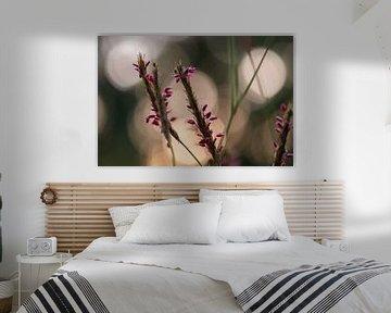 rosa Herbstpracht von Tania Perneel