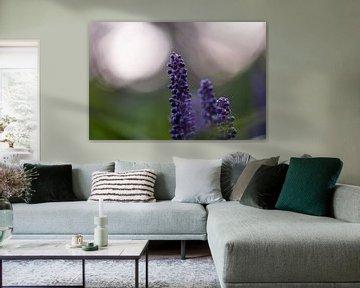 violette Herbstpracht von Tania Perneel