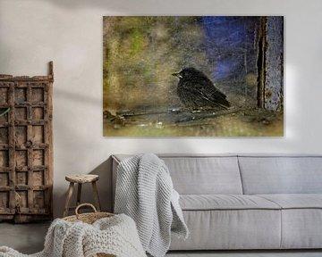 Kleiner Vogel von Claudia Evans