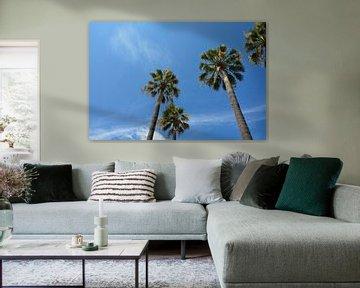 Palmen am blauen Himmel von Claudia Evans