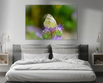 Schmetterling  -  Weißling von Claudia Evans
