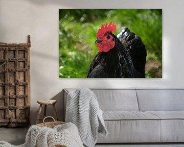 Das Huhn von Claudia Evans