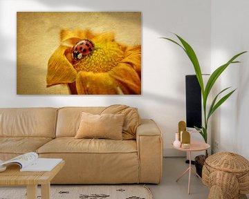 Lieveheersbeestje in bloei van Claudia Evans