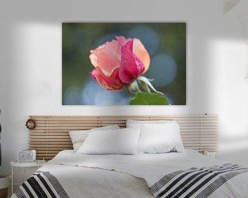 oranje roze van Tania Perneel