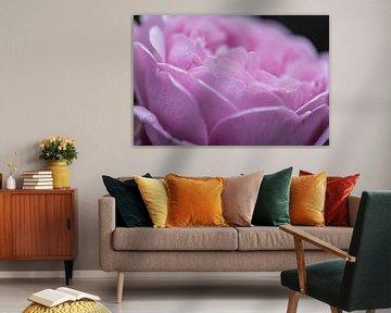 roze dauwdruppels van Tania Perneel