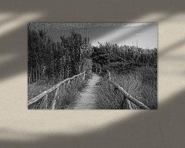 Auf dem Holzweg von Claudia Evans