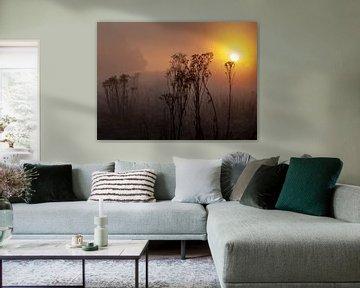 Sunrise van Thomas Depauw