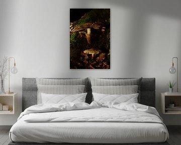 Champignons sur un tronc d'arbre sur Gerard de Zwaan