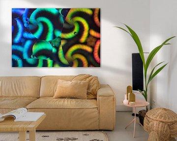Colors of the World 2. van Justin Sinner Pictures ( Fotograaf op Texel)
