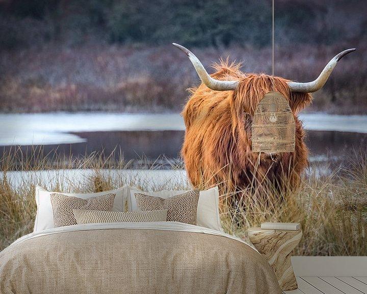 Beispiel fototapete: Schottischer Highlander von wilma ten Bhömer