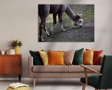 Alpaka von Corine Frelink