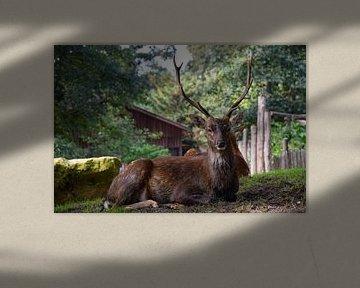 Ein Hirsch von Corine Frelink