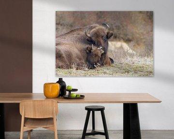 Moederliefde Europese Bison van Marianne Jonkman