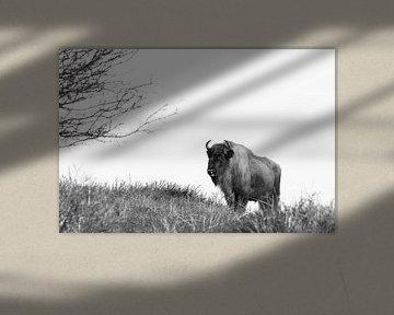 Europäischer Bison von Marianne Jonkman