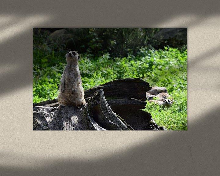 Beispiel: Erdmännchen von Corine Frelink