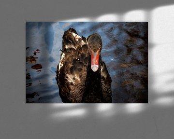 Schwarzer Schwan auf dem Wasser von Corine Frelink