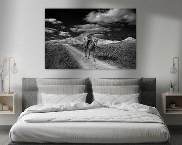 Reiterin auf Lanzarote, einer der Spanisch-Kanarischen Inseln in schwarz-weiß. von Harrie Muis