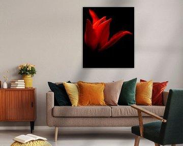 Nahaufnahme rote Tulpe von MSP Canvas