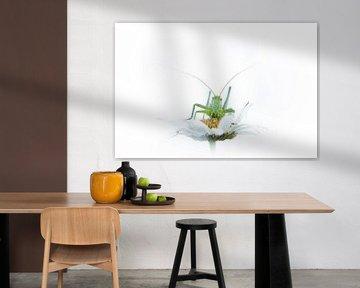 Sprinkhaan op witte margriet van Judith Borremans