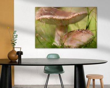 deux champignons beiges sur Tania Perneel