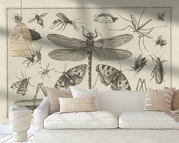 Insects, Jacob Hoefnagel, na Joris Hoefnagel