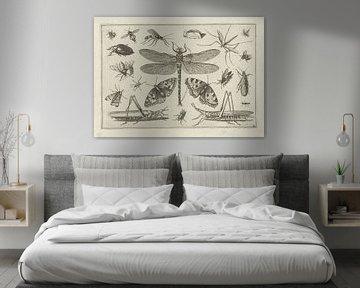 Insekten, Jacob Hoefnagel, nach Joris Hoefnagel