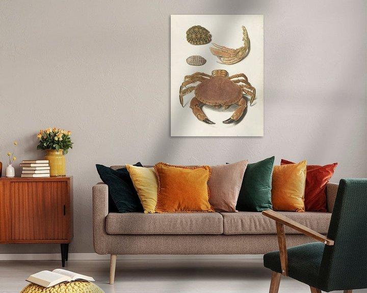 Sfeerimpressie: Een krab, een schaar van een krab en twee schilden van schildpadden, Johann Gustav Hoch
