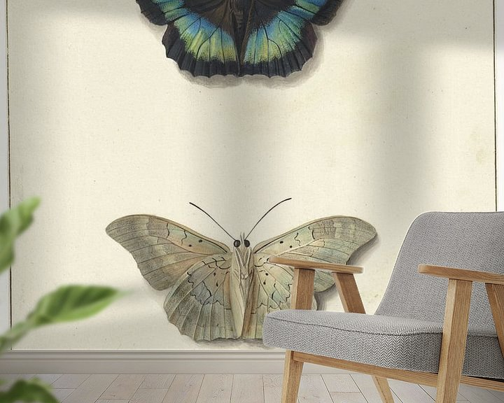 Sfeerimpressie behang: Boven- en onderaanzicht van een vlinder, Georgius Jacobus Johannes van Os