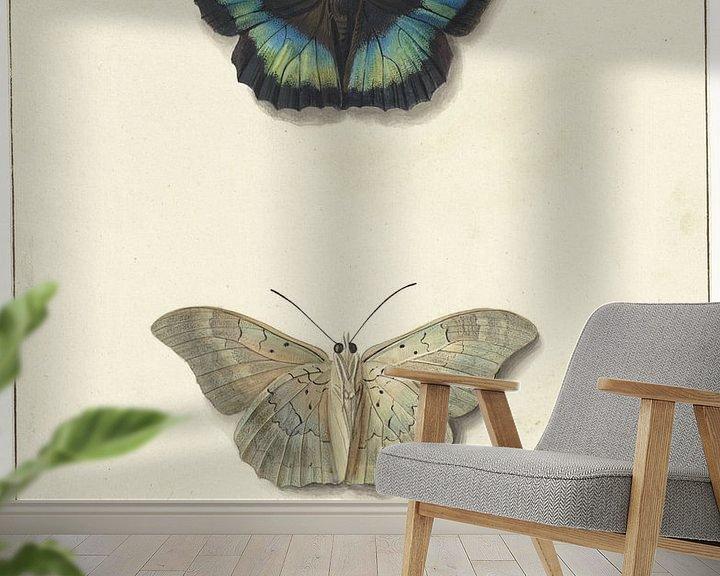 Impression: Vue supérieure et inférieure d'un papillon, Georgius Jacobus Johannes van Os