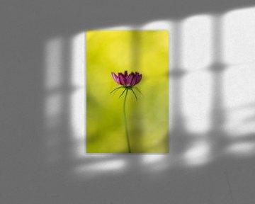 Blume von Luuk Belgers