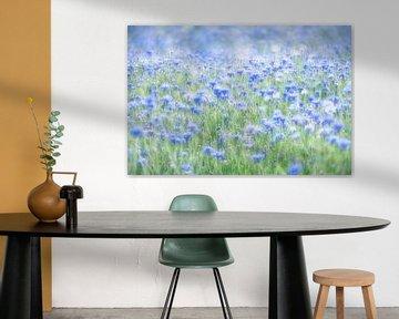 Flowerpower - In a sea of cornflowers van Rolf Schnepp