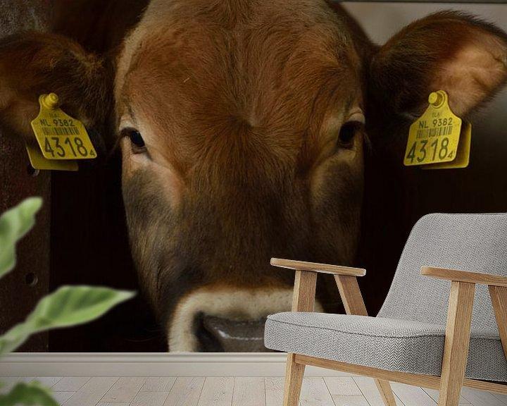Beispiel fototapete: Neugierige Kühe auf der schönen Insel Texel, Niederlande von Jeffry Clemens