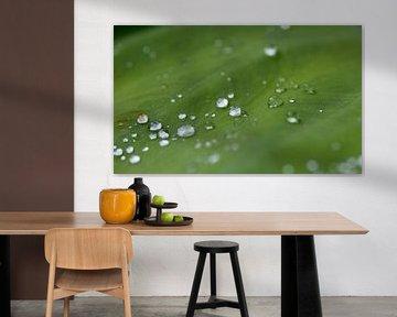 Regentropfen von Leontien van der Linden - Wapenaar
