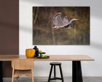 Héron (oiseau) en vol sur Tobias Luxberg