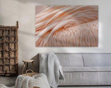 Vleugels roze pelikaan