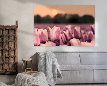 Tulpenveld bij zonsondergang von Tammo Strijker