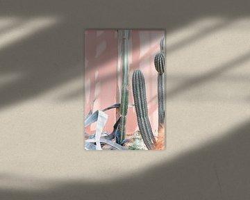 Kakteen im Gewächshaus gegen rosa Wand - botanischer Druck von Robin Polderman