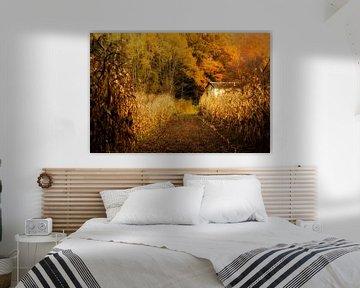 Das weiße Haus zwischen dem Maisfeld im Herbst von Birgitte Bergman